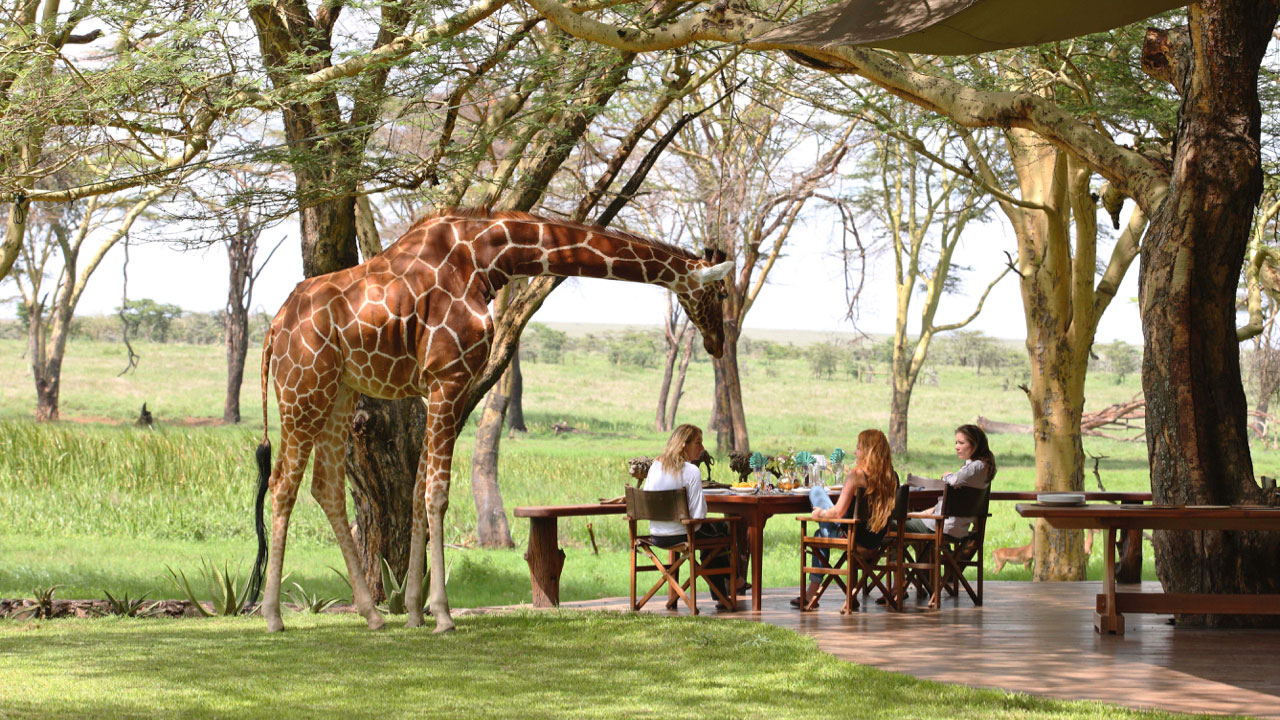 Scenic Air Safaris' new nine-day Endangered Species private-jet safari view of giraffe