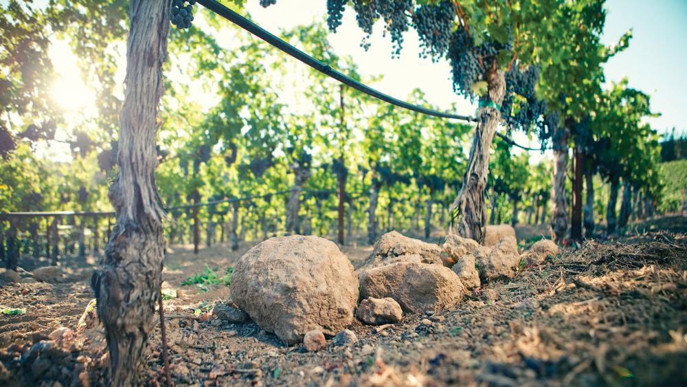 seillan vineyards