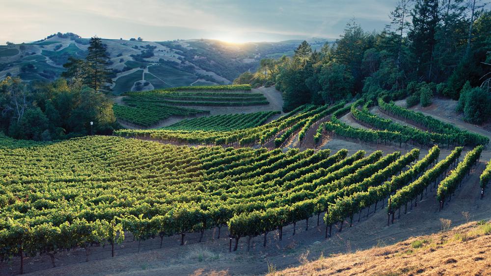 Seillan vineyard