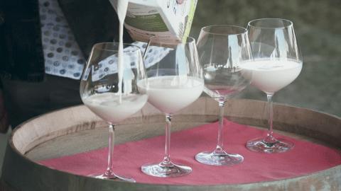 Milk poured into wine glasses for tasting