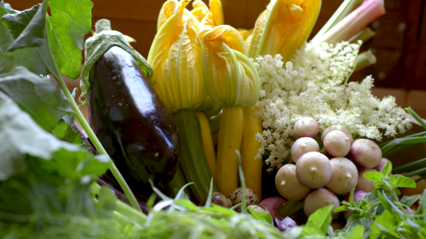 eggplant, herbs, squash, zucchini