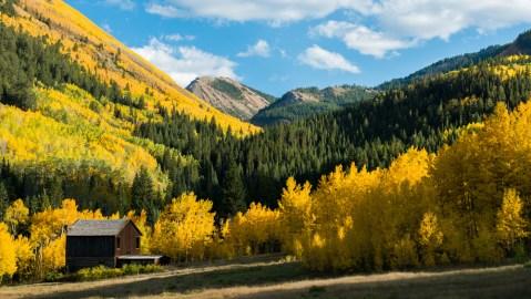 yellow trees Ashcroft Aspen