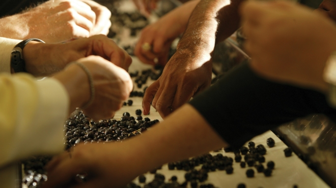 Napa Valley Reserve winemaking program
