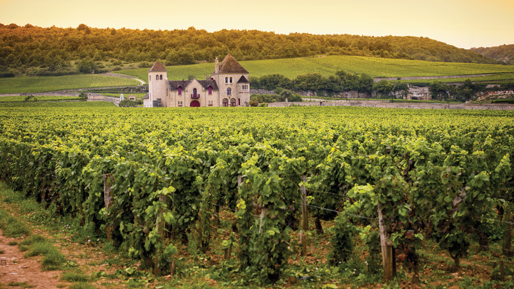 Vineyards in France's Burgundy wine region