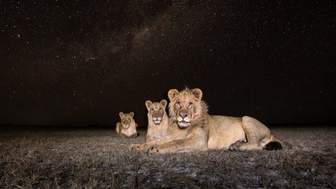 The Stars of Southern Africa