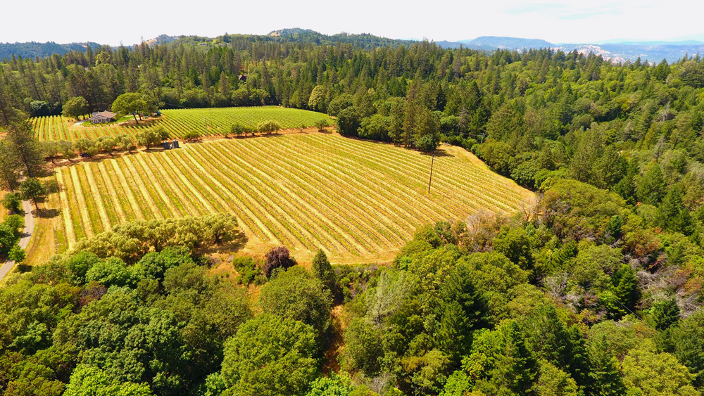 Dunn Vineyards Napa Valley