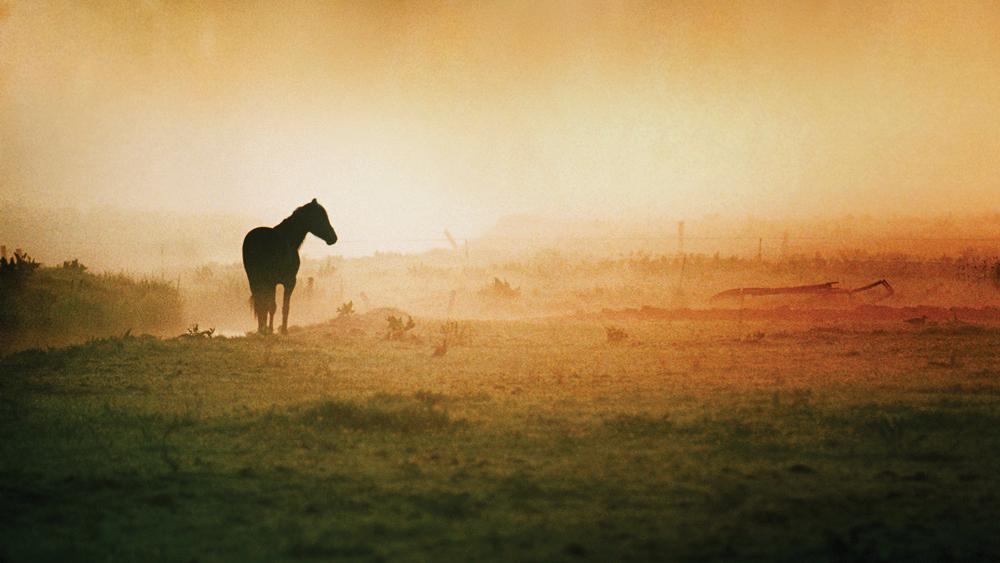 Hästens Mattresses