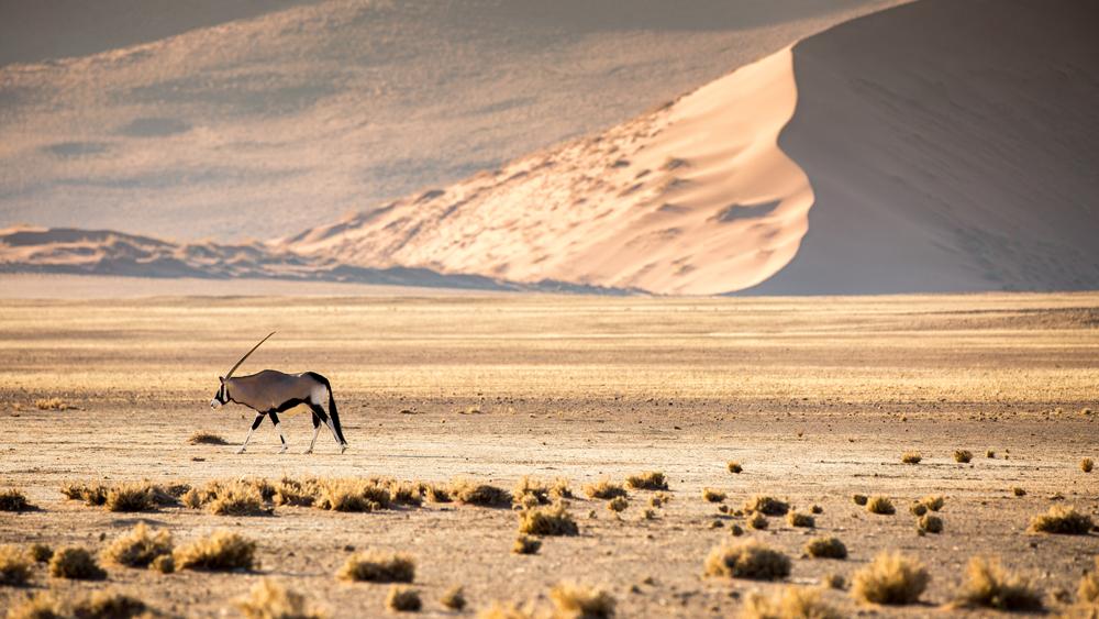 Sonop desert