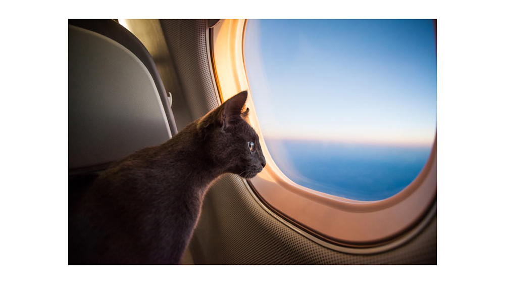 Flying Private with Pets