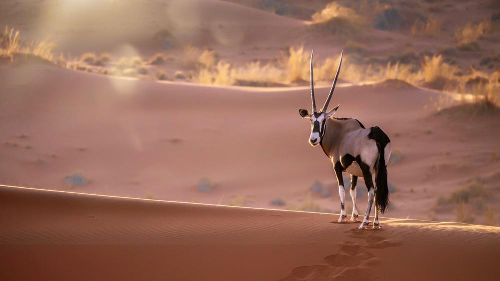 Namibia desert wildlife