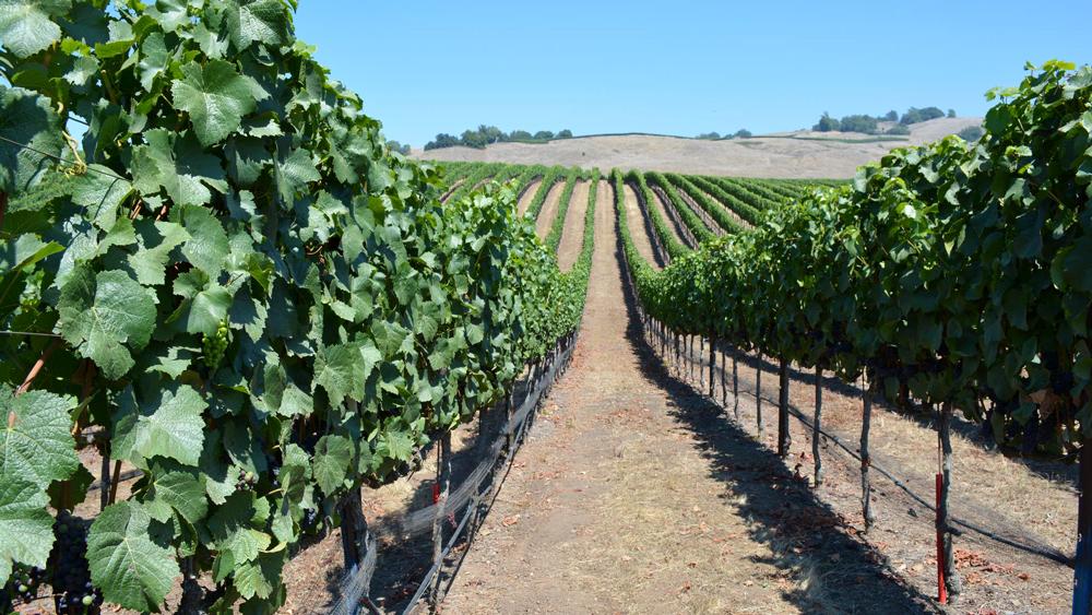 Petaluma Gap Wine AVA