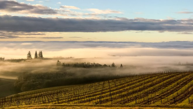 Willamette Valley Wine