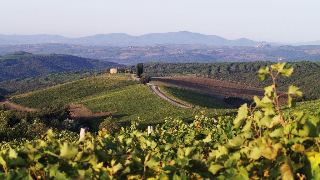 Vineyards at Rosewood Castiglion del Bosco
