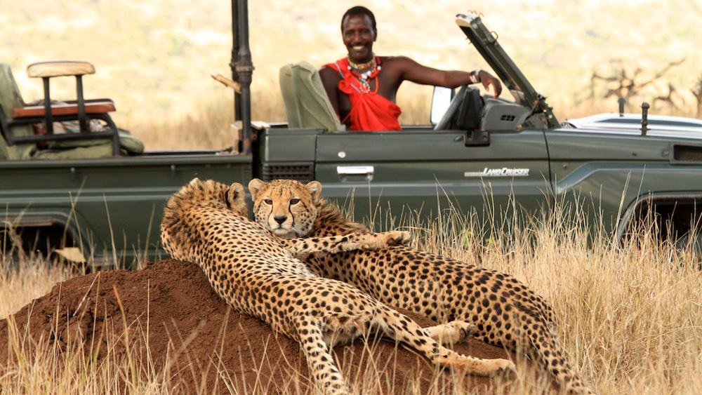Kenyan Game Drive