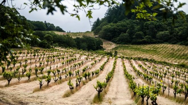 Mayacamas Vineyard