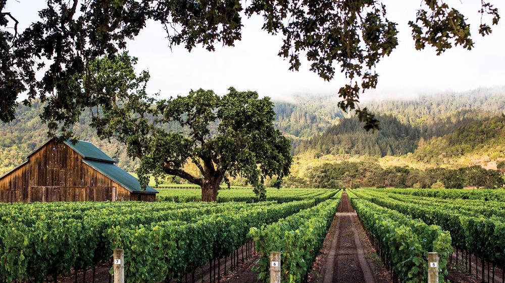 Dominus wine estate