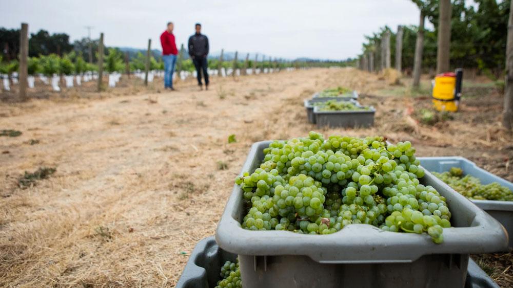 La Pelle Wines