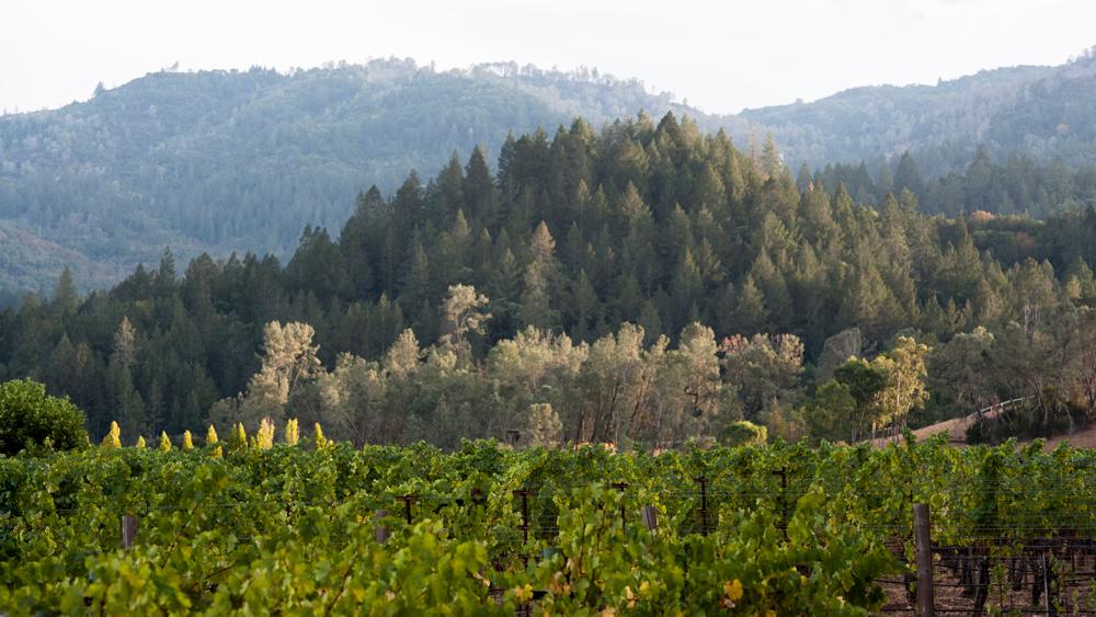 Ibex Vineyard
