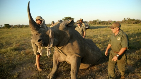 rhino notching andBeyond South Africa conservation