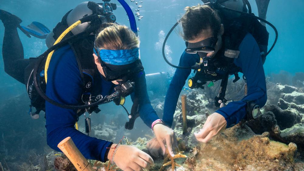 divers coral reef