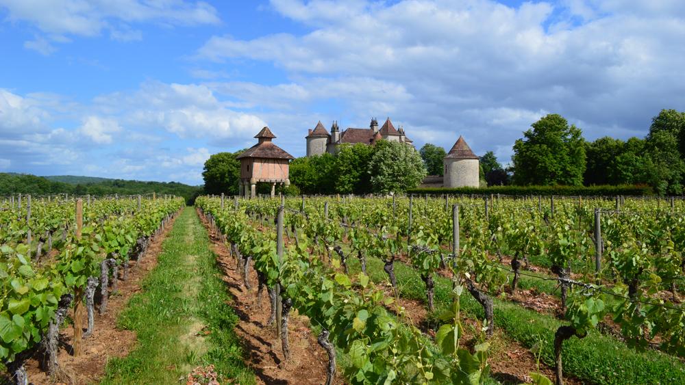 Château Lagrézette Vineyard