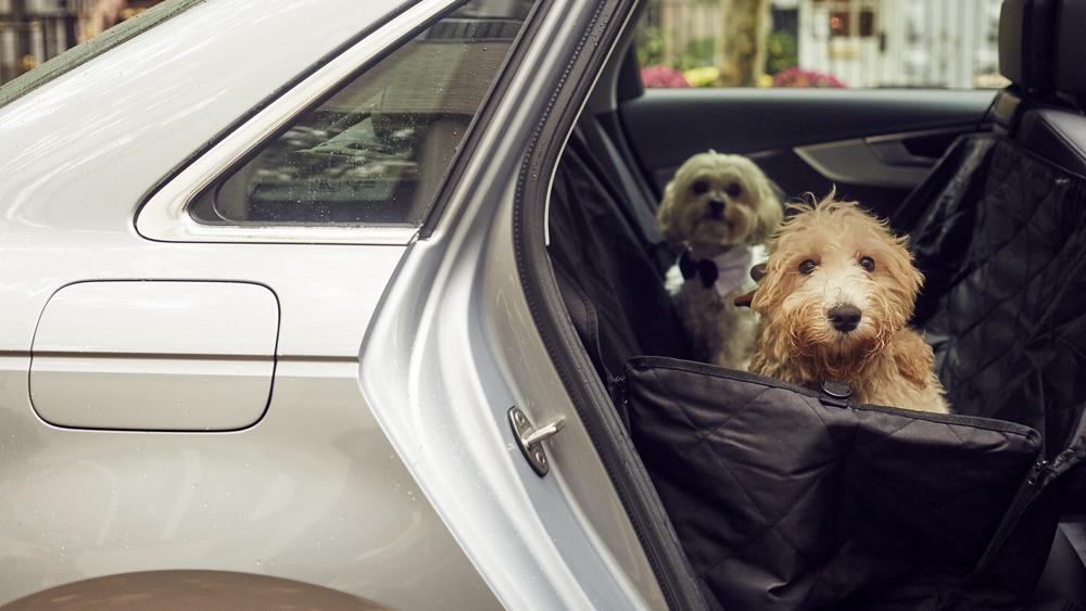 Silvercar by Audi Pet Owner Progam