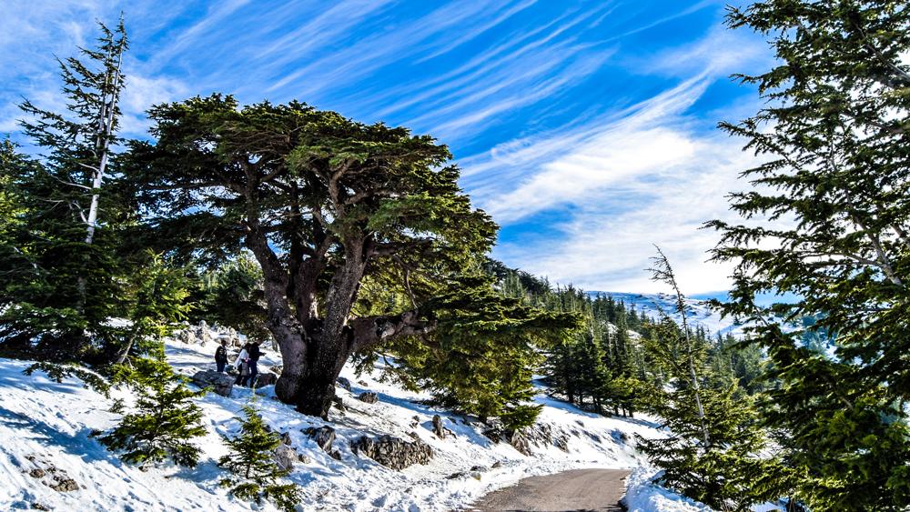 Cedars ski resort, Lebanon