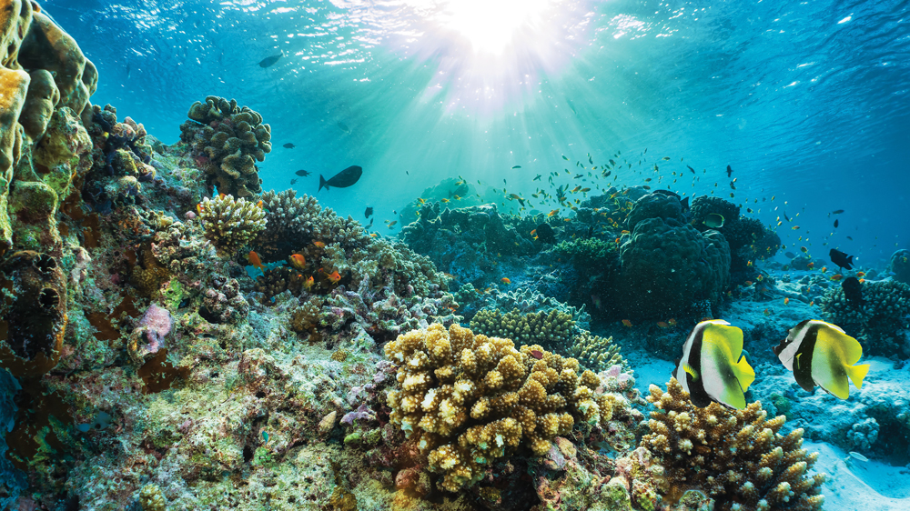 coral reef with tropical fish in the Maldives