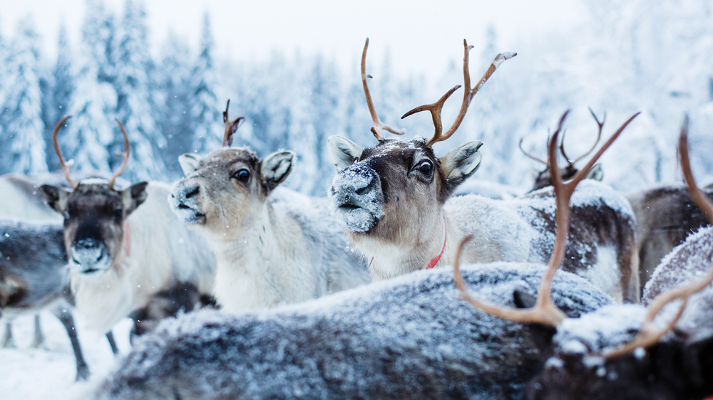 Aurora Safari Camp in Sweden's Lapland