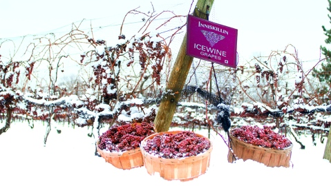 wine Inniskillin icewine