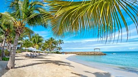 Caribbean beach palm trees Antigua