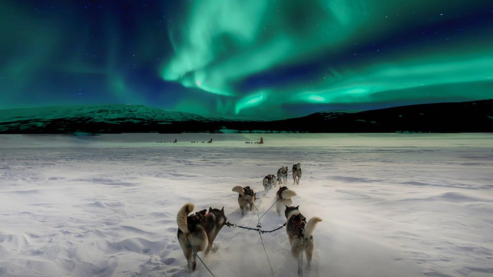 Northern Lights Aurora Borealis Tromsø, Norway dog snow sled