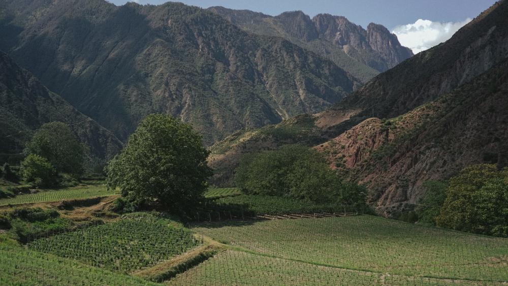 Adong-village