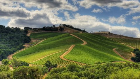 Daou Vineyards is located in Paso Robles