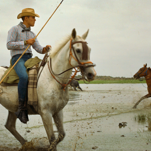Ganaderos, or local cowboys, work the edges of the round-up.
