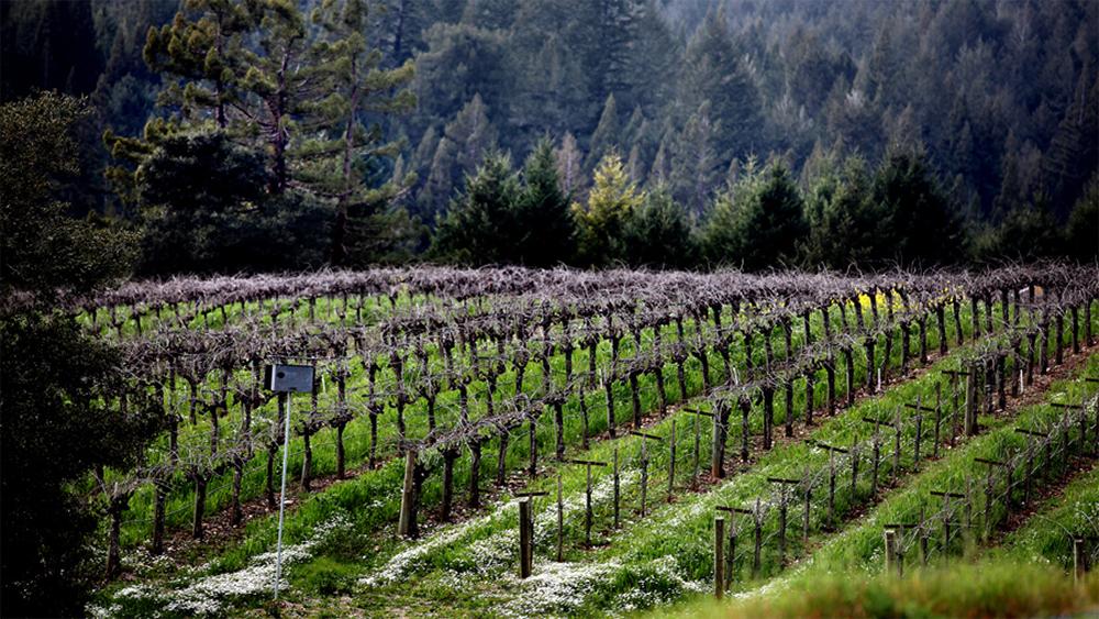 The Martaella Estate vineyard.
