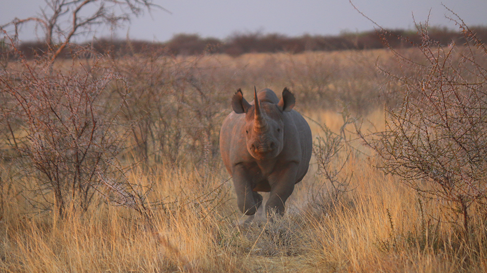 Save the Rhino Namibia
