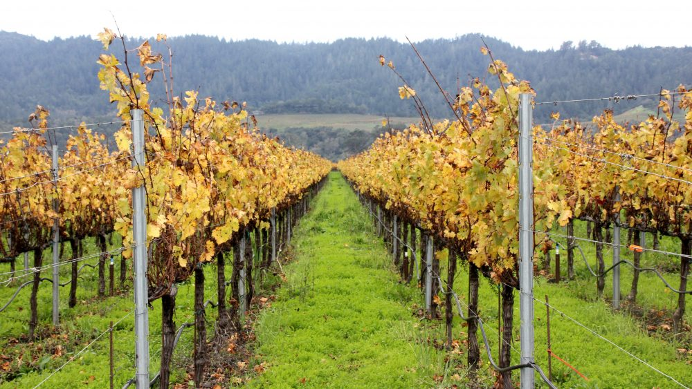 New artificial intelligence helped save a vineyard in the Napa Valley, California.