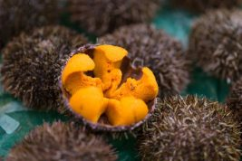 Sea urchin is one ingredient you can expect to see more of this year