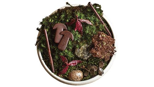 Moss and Mushroom at Noma