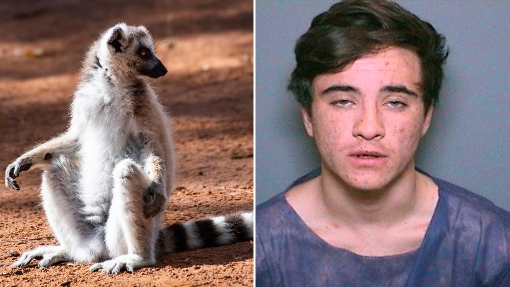 """A ring-tailed lemur and Aquinas """"Quinn"""" Kasbar"""