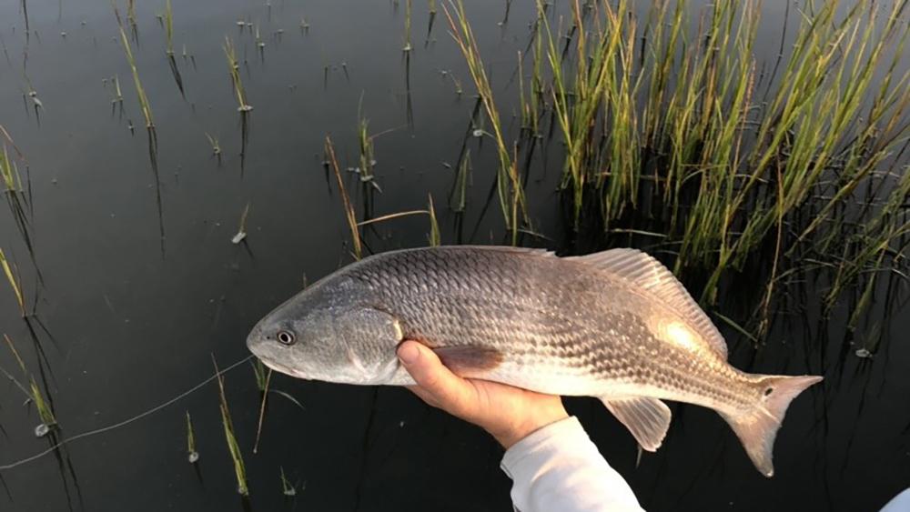 fishing redfish