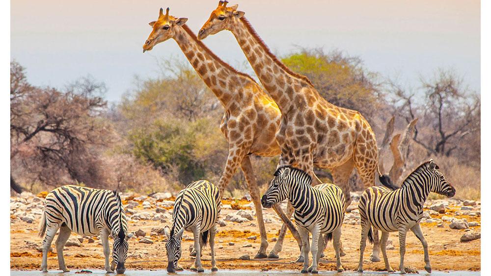 Hidden Treasures of South Africa