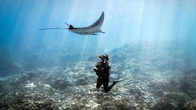 The Four Seasons Ko Olina and Trident Adventures are offering a variety of diving programs and experiences
