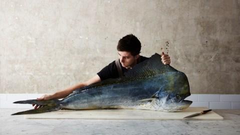josh niland fish butcher