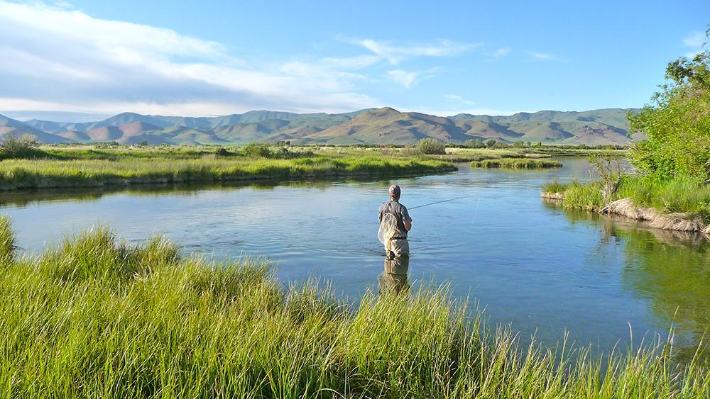 Fly Fishing In A Spring Fed Creek in Idaho