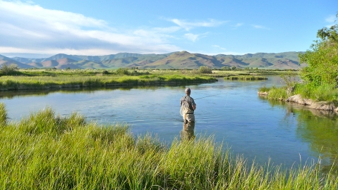 Fly Fishing In A Spring Fed Creek in Idaho