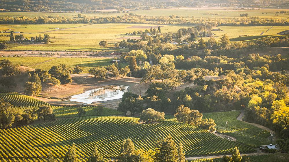 garden creek wine sonoma