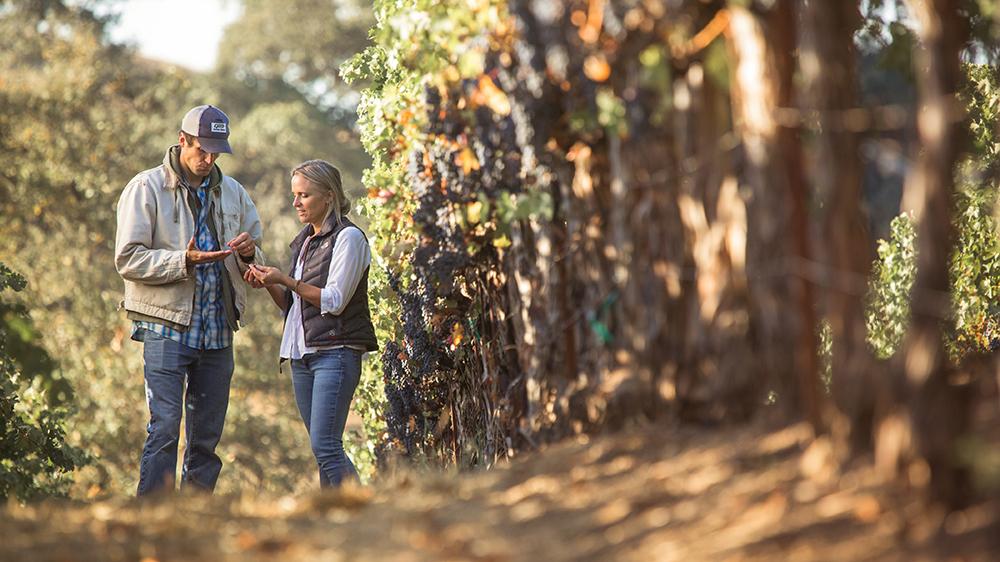 Garden Creek sonoma wine