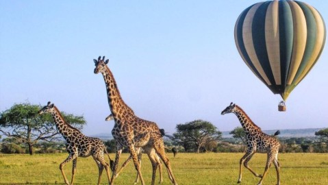ROAR Africa Kenya